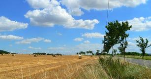 Raccolta del grano nella fine dell'estate in bello tempo Immagini Stock Libere da Diritti