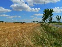 Raccolta del grano nella fine dell'estate in bello tempo Immagini Stock