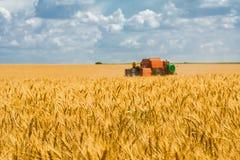 Raccolta del grano sul campo e sul cielo blu del fondo Fotografia Stock Libera da Diritti