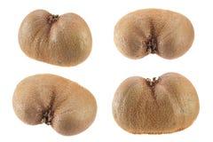 Raccolta del kiwi su bianco Immagini Stock