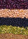 Raccolta del legume Fotografia Stock