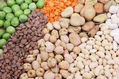 Raccolta del legume Immagine Stock