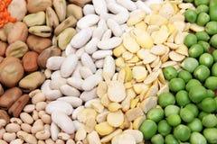 Raccolta del legume Immagini Stock Libere da Diritti