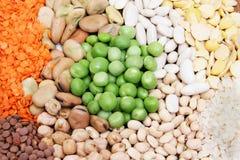 Raccolta del legume Fotografie Stock Libere da Diritti