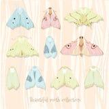 Raccolta del lepidottero Immagini Stock