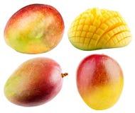 Raccolta del mango isolata sui precedenti bianchi Fotografie Stock Libere da Diritti