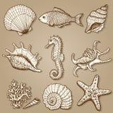 Raccolta del mare. Illustrazione disegnata a mano originale Fotografia Stock Libera da Diritti