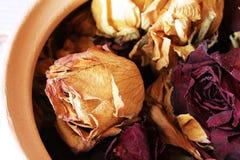 Raccolta del marito secco del regalo delle rose Fotografia Stock