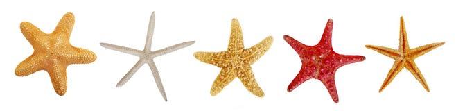 Raccolta del pesce della stella Immagine Stock Libera da Diritti