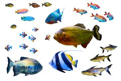 Raccolta del pesce isolata su bianco Immagini Stock Libere da Diritti