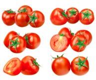 Raccolta del pomodoro Immagini Stock
