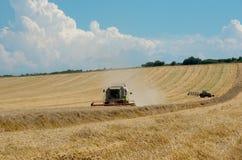 Raccolta del raccolto del grano Immagini Stock