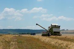 Raccolta del raccolto del grano Fotografia Stock