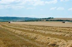 Raccolta del raccolto del grano Fotografie Stock Libere da Diritti