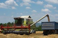 Raccolta del raccolto del grano Fotografia Stock Libera da Diritti