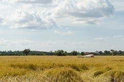 Raccolta del riso con il trattore Fotografia Stock