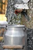 Raccolta del succo della betulla Fotografia Stock Libera da Diritti