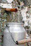 Raccolta del succo della betulla Fotografia Stock