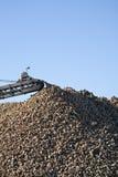 Raccolta del sugarbeet Fotografie Stock Libere da Diritti