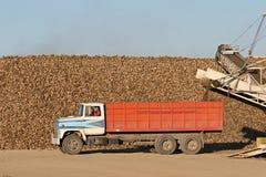 Raccolta del sugarbeet Immagini Stock