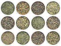 Raccolta del tè verde dell'a fogli staccabili Immagini Stock