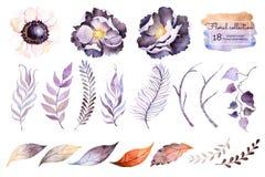 Raccolta dell'acquerello con il fiore Fotografia Stock