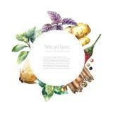 Raccolta dell'acquerello delle erbe e delle spezie fresche Fotografia Stock Libera da Diritti