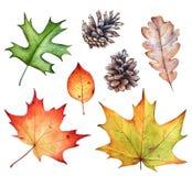 Raccolta dell'acquerello delle foglie e delle pigne di autunno sulla b bianca fotografia stock libera da diritti