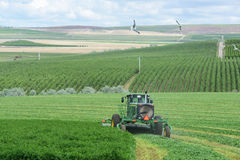 Raccolta dell'alfalfa Fotografie Stock Libere da Diritti