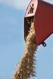 Raccolta dell'associazione che di svuotamento il grano Fotografie Stock Libere da Diritti
