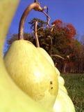 Raccolta dell'autunno Fotografia Stock