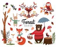 Raccolta dell'elemento della foresta con fondo autunnale, articoli di stagione disegnati a mano isolati su bianco Fotografia Stock