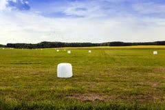 Raccolta dell'erba in cellofan Immagini Stock Libere da Diritti