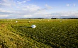 Raccolta dell'erba in cellofan Fotografia Stock Libera da Diritti