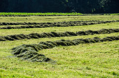 Raccolta dell'erba nella primavera immagine stock libera da diritti