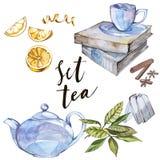 Raccolta dell'illustrazione disegnata a mano sul tè di tema insieme dell'acquerello Disegno del menu Fotografia Stock