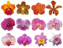 Raccolta dell'orchidea Immagini Stock Libere da Diritti
