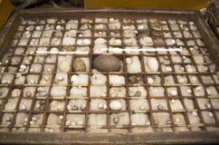Raccolta dell'uovo in museo Immagini Stock Libere da Diritti