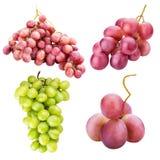 Raccolta dell'uva isolata su fondo bianco Immagini Stock