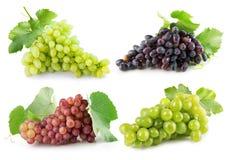 Raccolta dell'uva isolata sui precedenti bianchi immagine stock