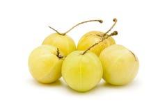Raccolta dell'uva spina indiana organica (emblica di Phyllanthus) Fotografie Stock Libere da Diritti