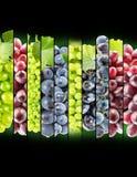 Raccolta della banda dell'uva sui precedenti neri Immagine Stock Libera da Diritti
