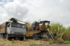 Raccolta della canna da zucchero in CUBA Fotografia Stock Libera da Diritti