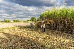 Raccolta della canna da zucchero, provincia di Tay Ninh, Vietnam immagini stock