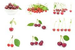 Raccolta della ciliegia Fotografia Stock