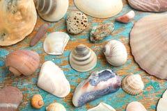 Raccolta della conchiglia e delle stelle marine Immagine Stock