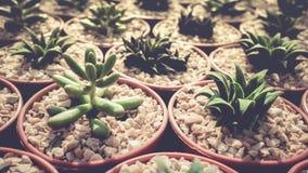 Raccolta della famiglia di cactus Immagini Stock Libere da Diritti
