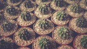 Raccolta della famiglia di cactus Fotografia Stock