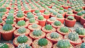 Raccolta della famiglia di cactus Fotografia Stock Libera da Diritti