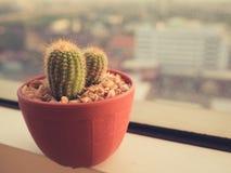 Raccolta della famiglia di cactus Immagine Stock Libera da Diritti